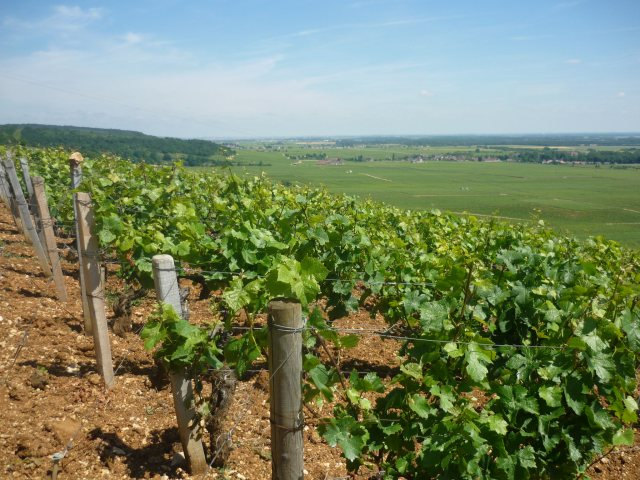 Sun in Burgundy at last...