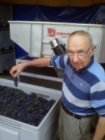 Jean Trapet with 2013 grapes