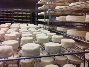 Cheeses maturing at Gaugry factory