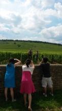 Horse ploughing at Romanée Conti